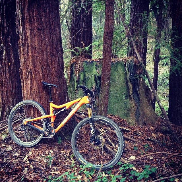 Redwoods and ferns were on the menu today.