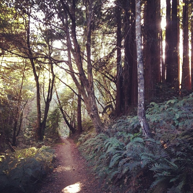 Like I said, ferns and redwoods. Loved it!