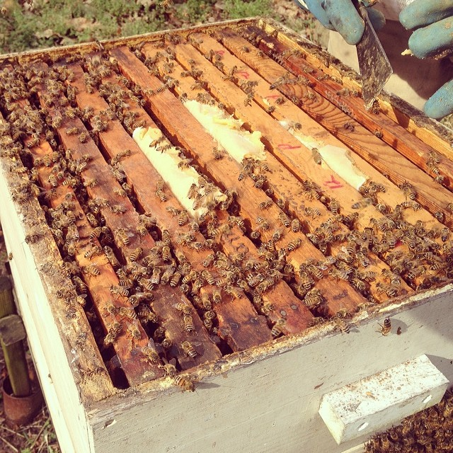 Playing with bees. #100happydays