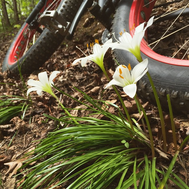 Stopped to smell the flowers. #30daysofbiking #ridewithimba