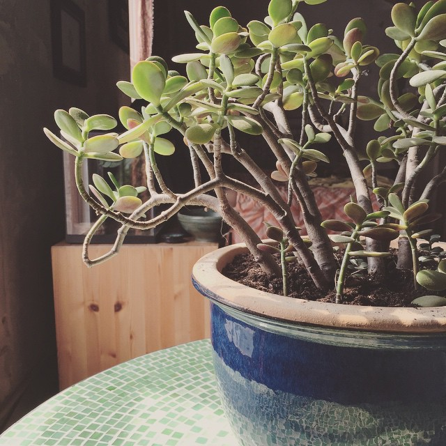Mama jade has a new home.